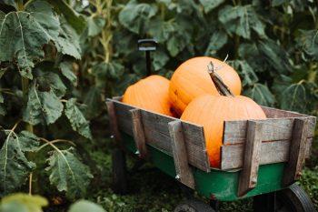 第2回/賃貸住宅管理適正化法生んだ「かぼちゃの馬車事件」って?